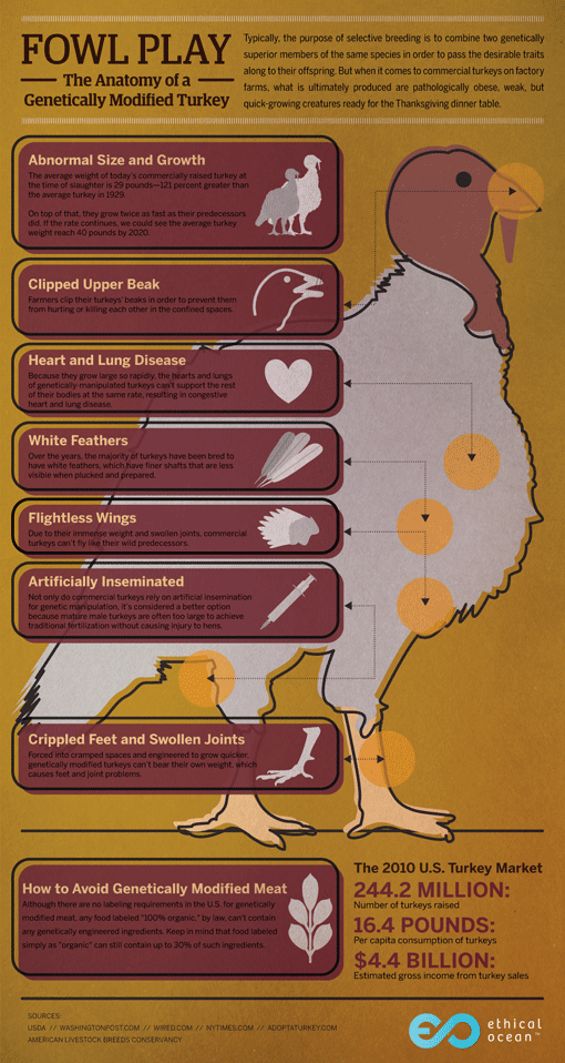 The Anatomy of a Genetically Modified Turkey [INFOGRAPHIC ...
