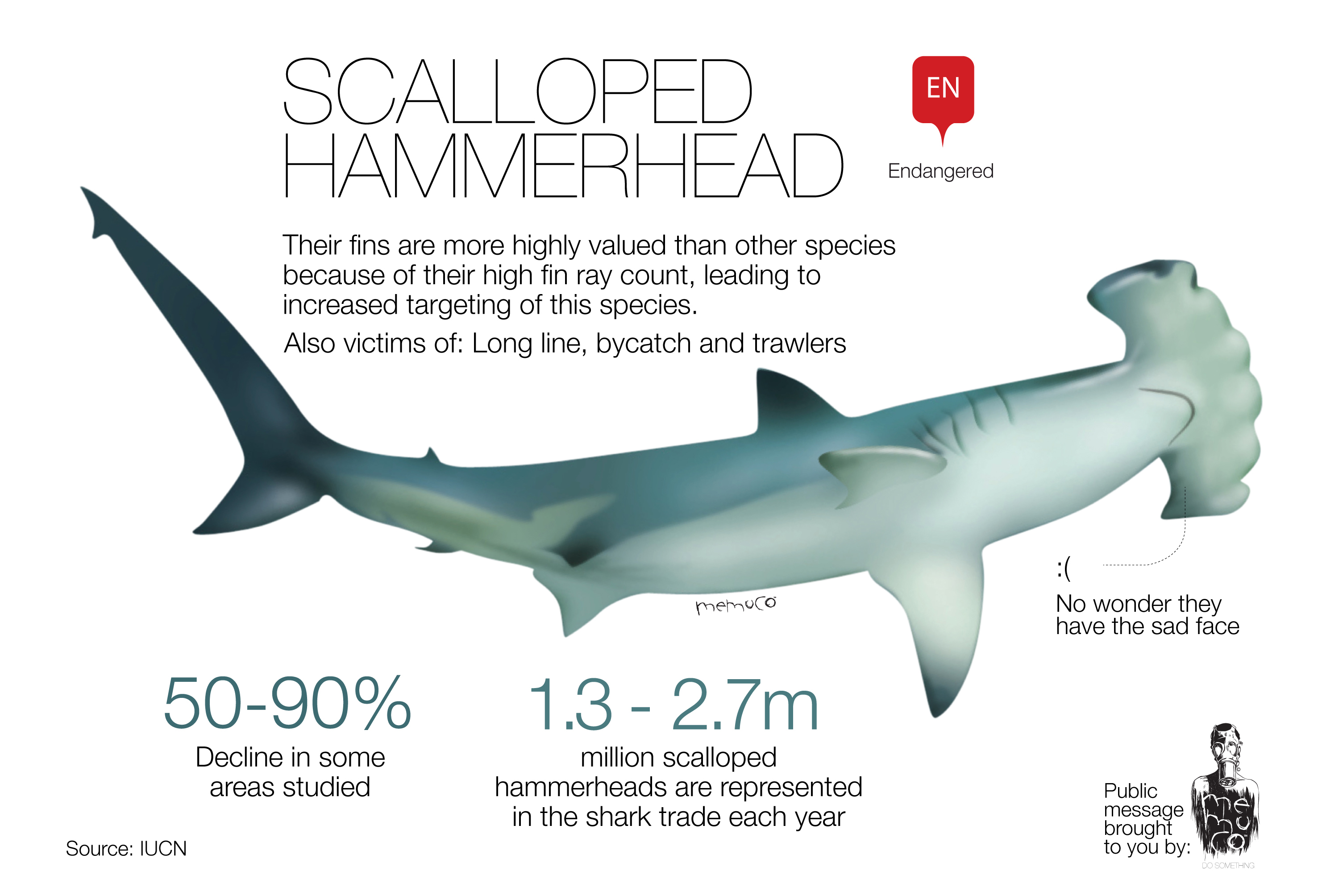 Scalloped Hammerhead [INFOGRAPHIC] – Infographic List