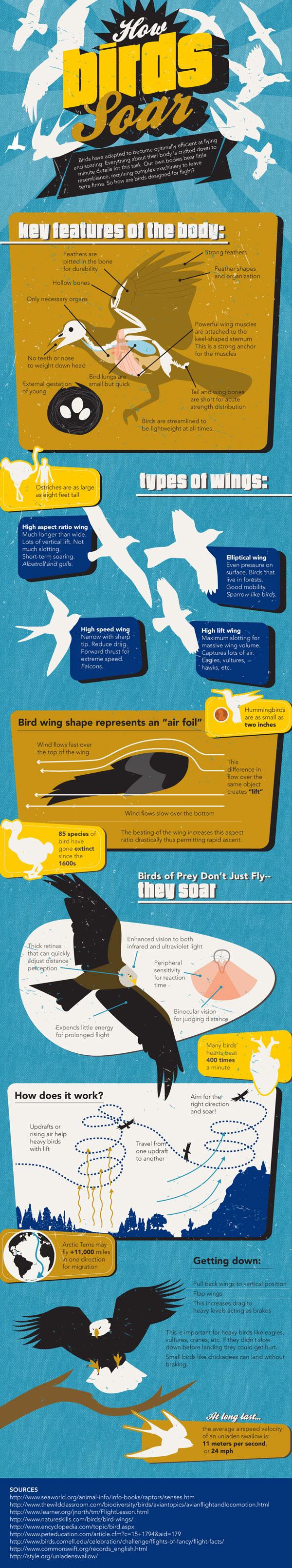 how-birds-soar_50abba6936636