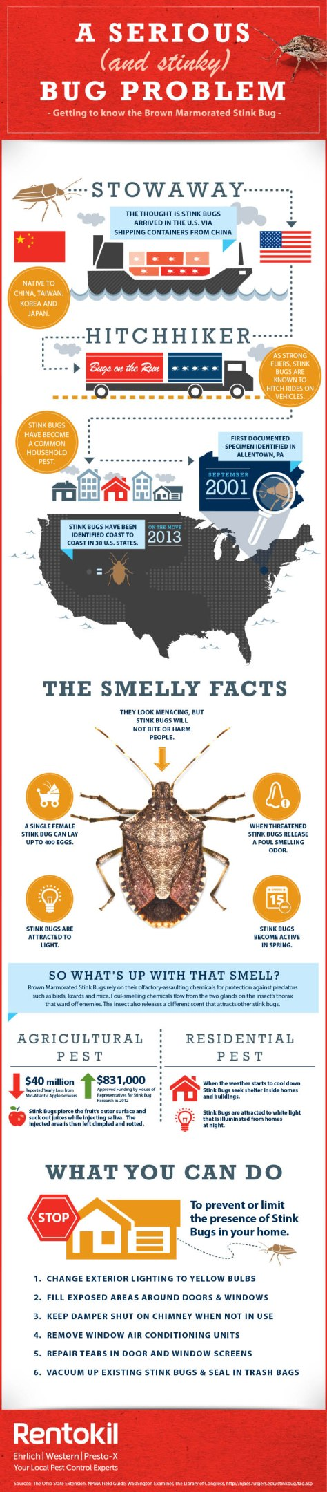 getting-to-know-the-brown-marmorated-stink-bug_5255ad7921cc9