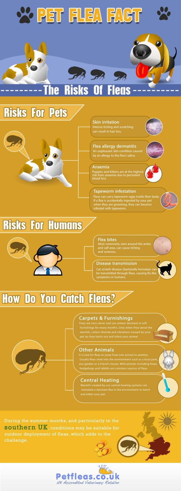 Pet Flea Facts File The Risks Of Fleas