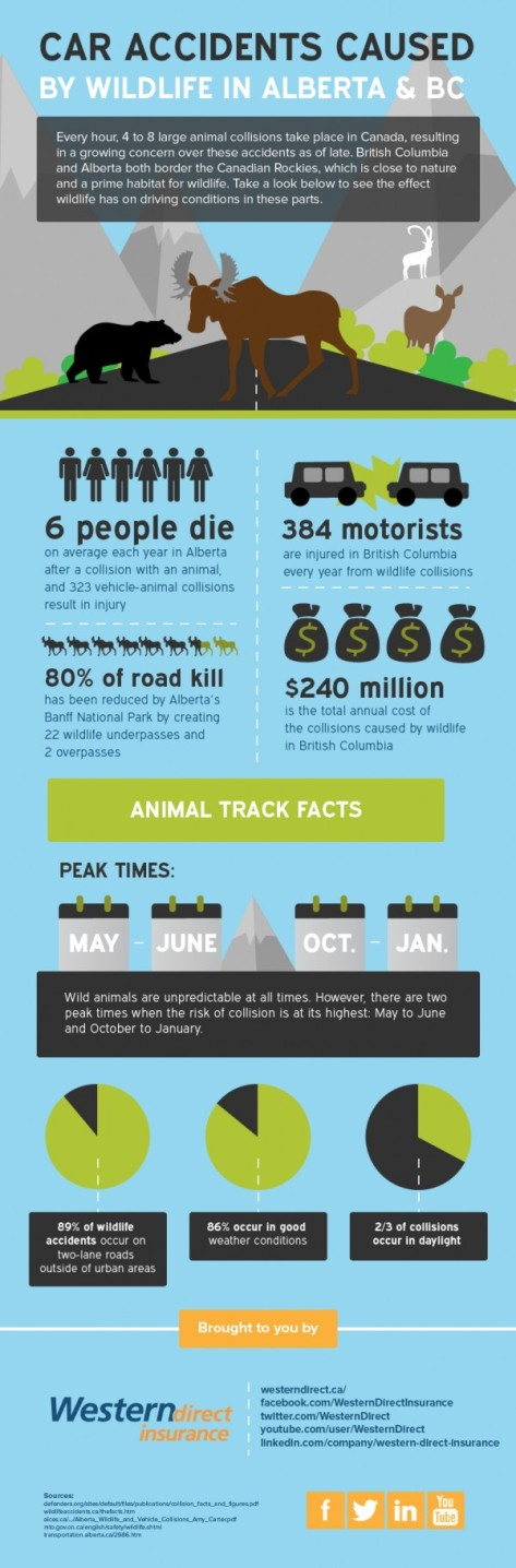 Car Accidents Caused By Wildlife In Alberta bc