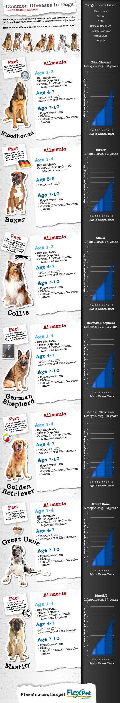 large dog diseases