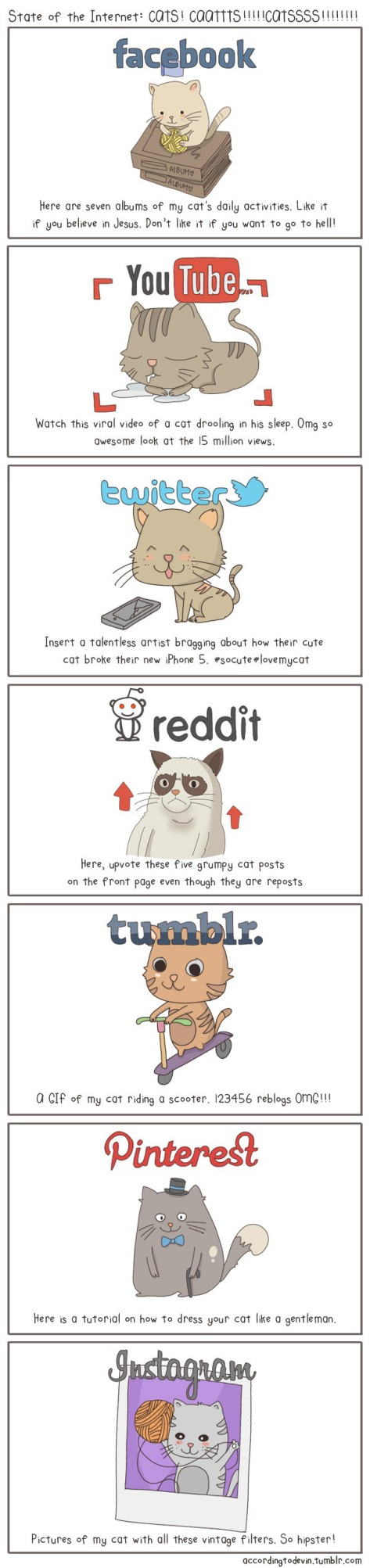 What Social Media networks would look like cats